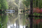 Pond Art - Magnolia Plantation Gardens Series II by Suzanne Gaff
