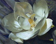 RW Cooke - Magnolia
