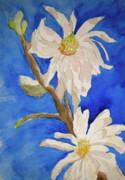 Magnolia Stellata Blue Skies Print by Beverley Harper Tinsley