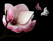 Pink And White Flower Posters - Magnolia with Butterflies Poster by Kaye Menner