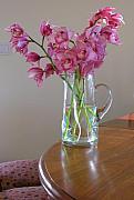 Robert Bissett - Magnolias