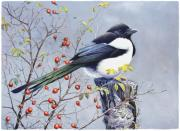 Magpies Paintings - Magpie by Dag Peterson