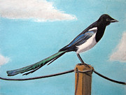 Magpies Drawings Metal Prints - Magpie Metal Print by Popokino Art