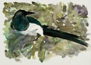 Magpies Paintings - Magpie Splash by Carolyn Doe