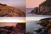 Otter Photos - Maine Acadia National Park Seacoast Photography by Juergen Roth