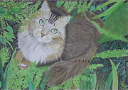 Pastel  Drawings Paintings - Maine Coon Cat by Cybele Chaves