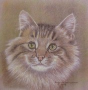 Dorothy Coatsworth Painting Posters - Maine Coon Cat Poster by Dorothy Coatsworth