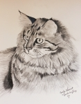 Maine Coon Cat Dusty Print by Carolyn Valcourt