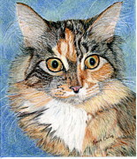 Maine Drawings Prints - Maine Coon Kitten Print by Karen Curley