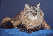 Cat Portraits Pastels Prints - Maine Coon Kitty Print by Kay Ridge