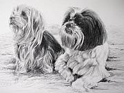 Yorkie Drawings - Maisey and Ollie by Keran Sunaski Gilmore