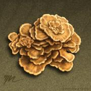 Earth Tones Drawings Prints - Maitake Mushroom Print by Marshall Robinson