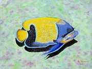 Majestic Angelfish Posters - Majestic Angelfish Poster by Riley Geddings