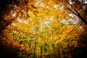 Autumn. Fall Colors - Majestic Autumn by Anthony Rego