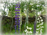 Garden Scene Digital Art Posters - Majestic Delphinium and Quaking Aspen Poster by Cindy Wright