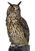 Majestic Eurasian Northern Eagle Owl Bubo Bubo - Hibou Grand-duc - Buho Real - Nationalpark Eifel Print by Urft Valley Art