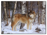Nature Center Prints - Majestic Print by Gerry Sibell