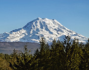 Mt Rainier Photos - Majestic by Kelley King