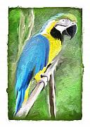 Pets Art Digital Art - Majestic Macaw by Terry Mulligan
