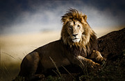 African Wild Life Posters - Majestic Male On Mound Poster by Mike Gaudaur