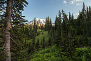 Mount Rainier Prints - Majestic Rainier Print by Mike Reid