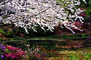 Tanya Tanski - Majesty Garden....