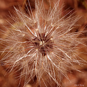 Rosette Metal Prints - Make A Wish Metal Print by Cheryl Young