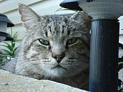 Cat Photos - Make My Day by Dean Caminiti