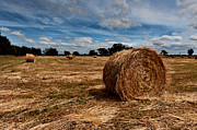 Hay Bales Digital Art Posters - Making Hay Poster by Heather Thorning