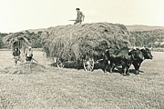Haying Photos - Making Hay While the Sun Shines 1903 by Padre Art