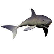 Digitally Generated Image Art - Mako Shark by Corey Ford