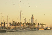 Flock Of Bird Art - Malaga Lighthouse by Eva Millan Photography
