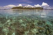 Sealife Art Framed Prints - Malaysia, Mabul Island Framed Print by Dave Fleetham - Printscapes