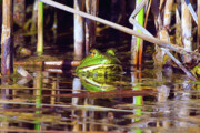 Guarding Prints - Male Arizona Bull Frog Print by Steven Love