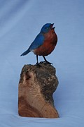 Birds Sculpture Acrylic Prints - Male Bluebird Acrylic Print by Betsy Popp
