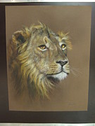Manley Pastels - Male Lion by Debbi-Lee Swart