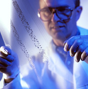 Dna Analysis Framed Prints - Male Technician Examines Dna Fingerprints Framed Print by Tek Image