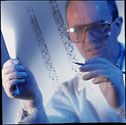 Dna Analysis Framed Prints - Male Technician Examines Dna Sequences Framed Print by Tek Image