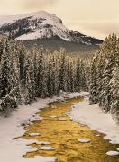 Tree In Golden Light Posters - Maligne River in Winter Poster by Darwin Wiggett