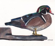 Colored Pencil Drawings - Mallard Duck by Lea Velasquez