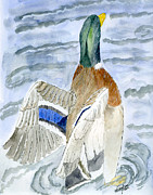 Wild Life Drawings - Mallard by Eva Ason