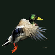 Mallards Paintings - Mallard Freehand by Ernie Echols