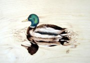 On Wood Pyrography Pyrography - Mallard by Ilaria Andreucci
