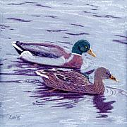 Mallards Pastels Posters - Mallard Pair Poster by Jan Amiss