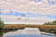 Donnie Smith Framed Prints - Mallards In Flight Framed Print by Donnie Smith
