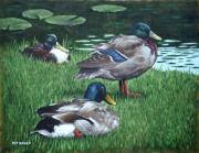 Water Lilies Posters - Mallards On River Bank Poster by Martin Davey
