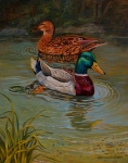 Mallard Ducks Paintings - Mallards together in their pond. by Alan Carlson