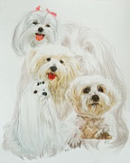 Maltese Dog Posters - Maltese Poster by Barbara Keith