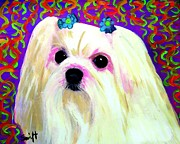 Maltese Dog Posters - Maltese Poster by Char Swift