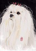 Dog Art Paintings - Maltese by Debra Jones